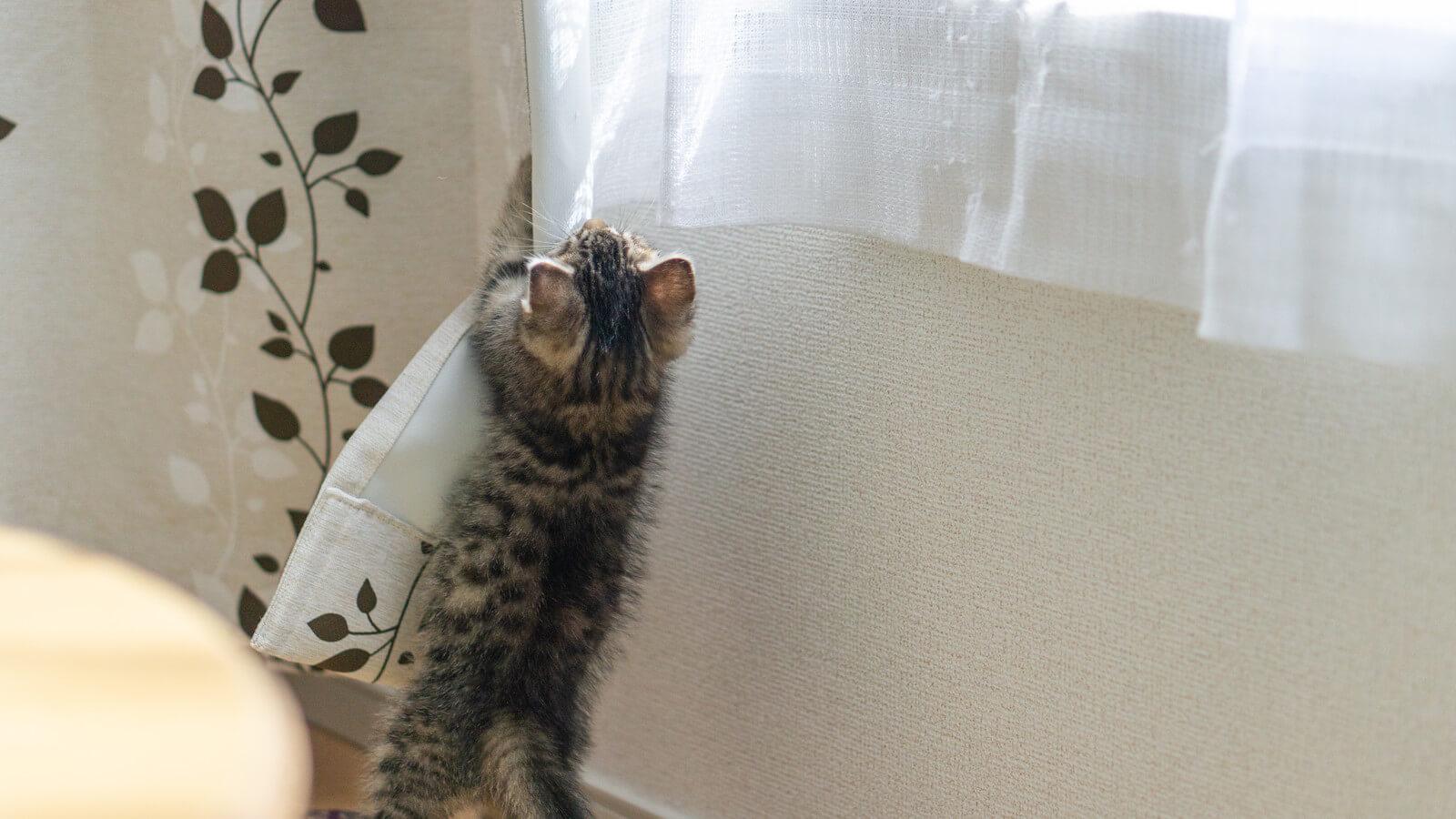 カーテンにしがみつくネコ